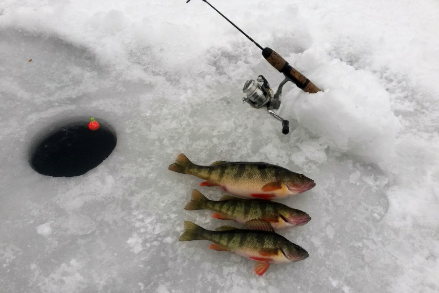 Rodney 39 s reel outdoors ice fishing charters in kelowna for Ice fishing perch